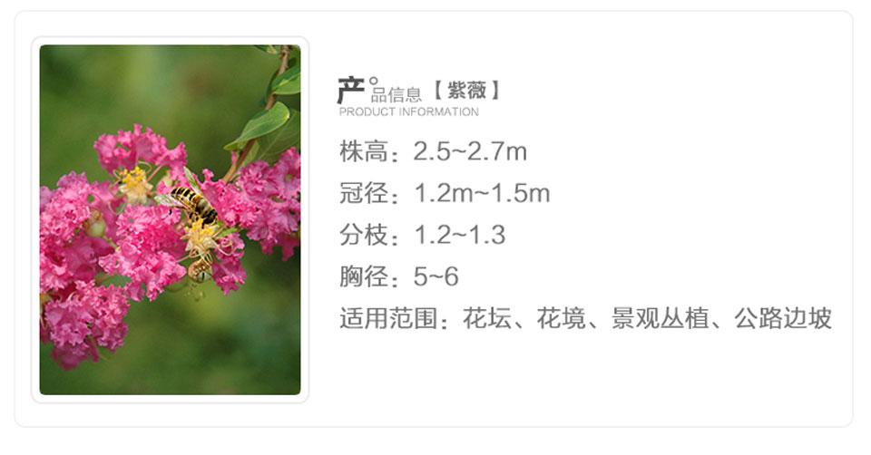 苗圃詳情_02.jpg